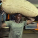 Delivering sacks full of cocoa to a local depot.