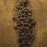 Cocoa beans spills out of a split sack.