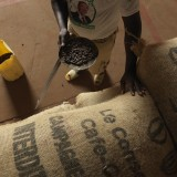 Quality control of cocoa beans at COOPANA in Amelekia.