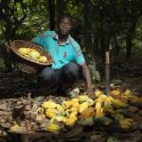 Portrait of Ebrottie Tanoh Florentin at his cocoa farm.