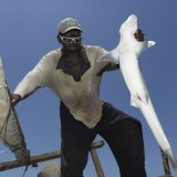 Even the numerous sharks that are being caught off the coast of Tanzania far smaller than in previous years.