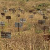 Patbana village Ebola cemetery, Makeni.
